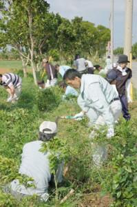 宮古島の緑を創出するためにも造林事業は重要な役割を担っている