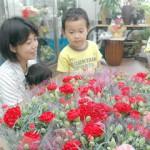 きょう9日は母親に日ごろの感謝を伝える「母の日」。店内には真っ赤なカーネーションが並べられ人気を集めていた=8日、市内の花屋