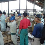多くの農家が訪れ消石灰を受け取った=14日、JAおきなわ多良間家畜市場