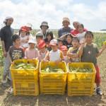 トウモロコシを収穫した子どもたち=19日、上野野原